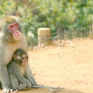 猿の親子の画像